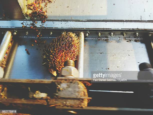 High Angle View Of Fruit On Conveyor Belt In Factory