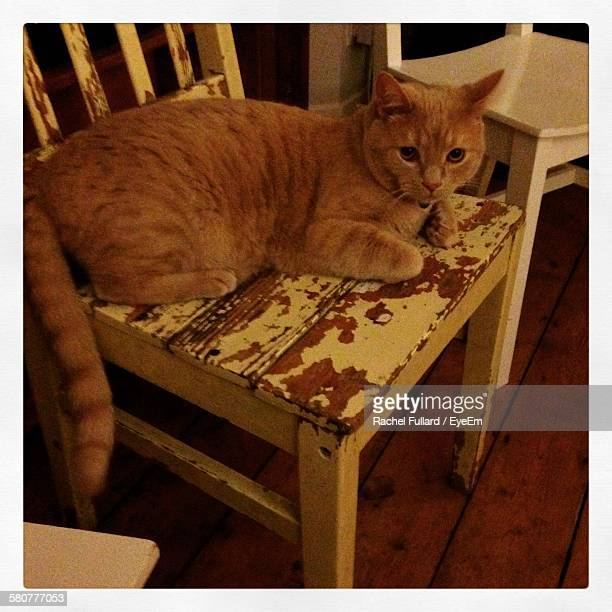 High Angle View Of Ginger Cat Sitting On Old Chair At Home