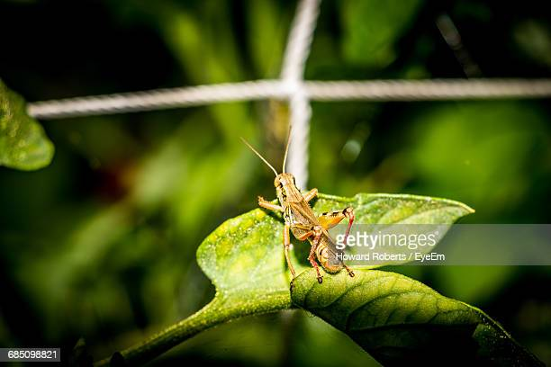 High Angle View Of Grasshopper On Leaf At Vegetable Garden