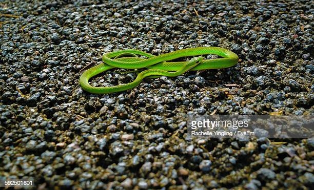 High Angle View Of Green Garden Snake On Field