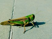 High Angle View Of Green Grasshopper On Field