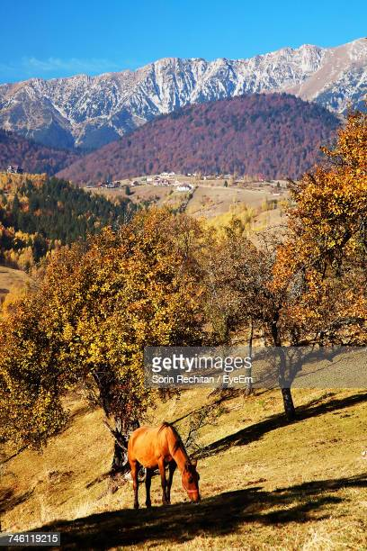 High Angle View Of Horse Grazing By Trees On Hill Against Mountain