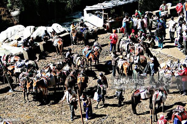 High Angle View Of Horses And Pilgrims
