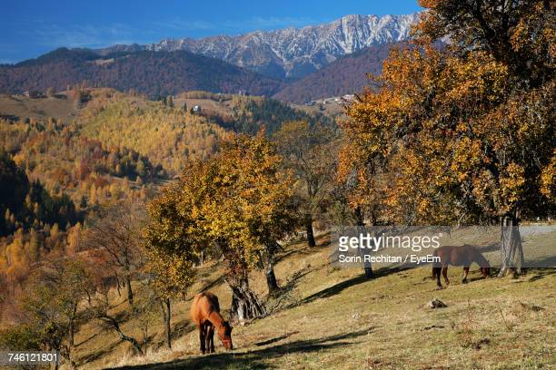 High Angle View Of Horses Grazing By Trees On Hill Against Mountain