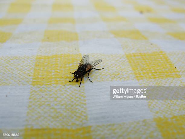 High Angle View Of Housefly On Table