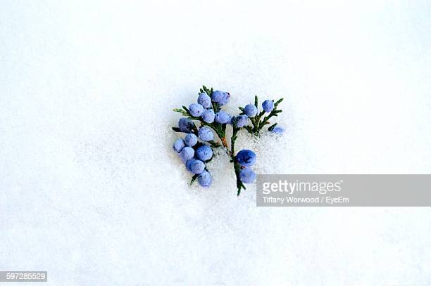 High Angle View Of Juniper Berries On Snow Covered Field