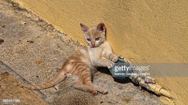 High Angle View Of Kitten By Water Meter