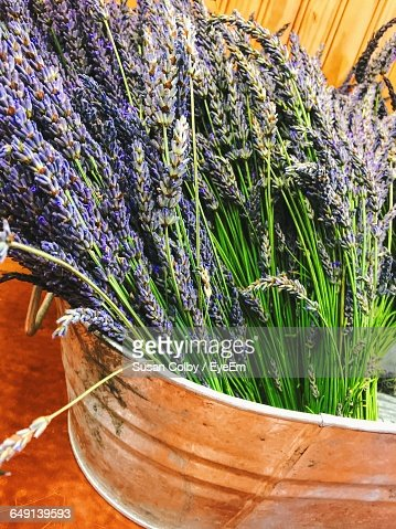 High Angle View Of Lavenders In Container