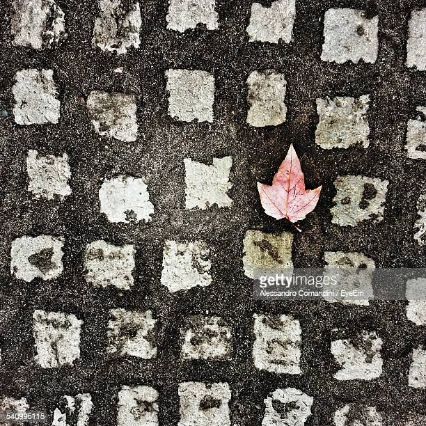High Angle View Of Leaf On Footpath During Autumn