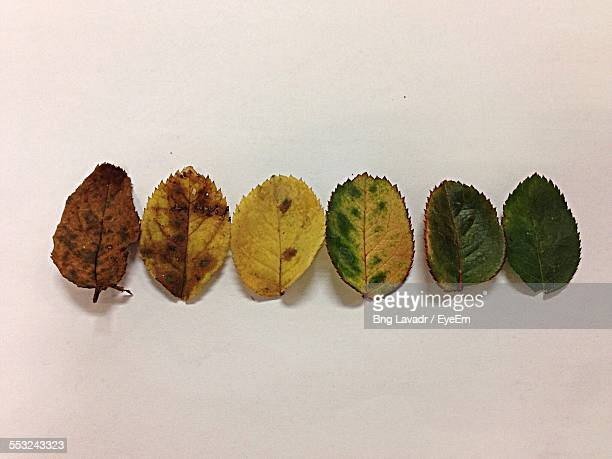High Angle View Of Leaves Arranged On Table