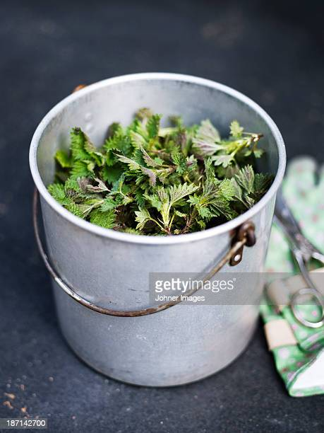 High angle view of metal bucket full of nettle