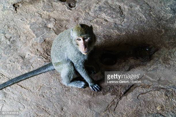 High Angle View Of Monkey Sitting On Concrete Floor