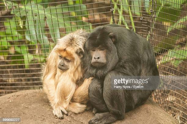 High Angle View Of Monkeys In Cage At Zoo