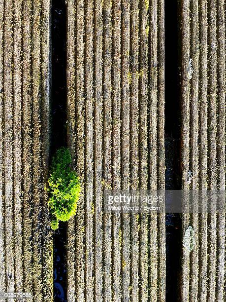 High Angle View Of Moss Growing Amidst Wooden Planks