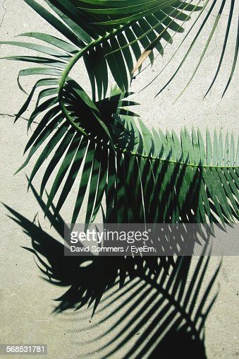 High Angle View Of Palm Leaf