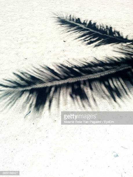 High Angle View Of Palm Leaves Shadow On Sand