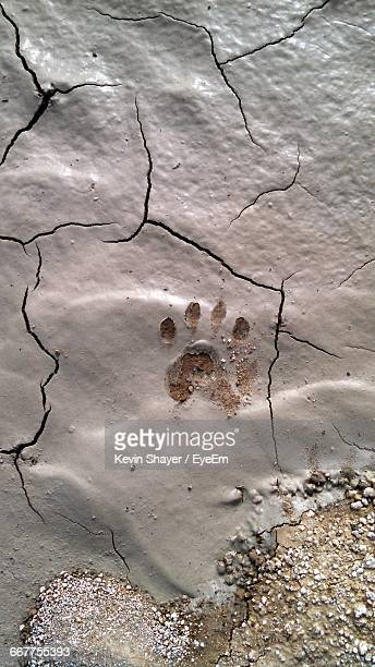 High Angle View Of Paw Print On Cracked Field