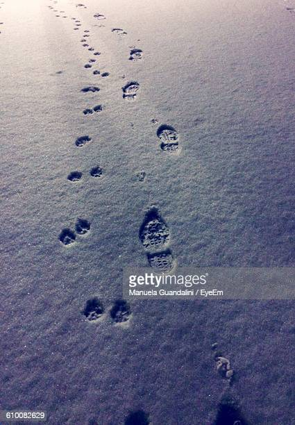 High Angle View Of Paw Prints And Footprints On Snow