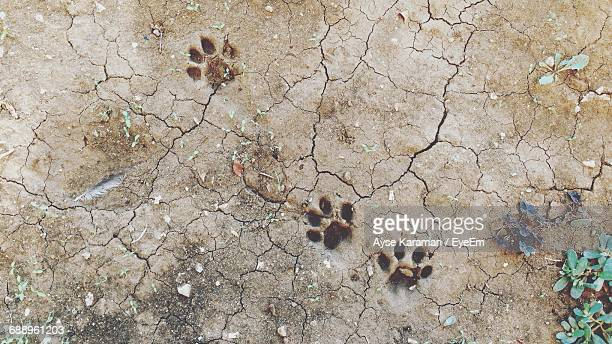 High Angle View Of Paw Prints On Cracked Field