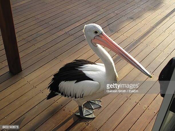 High Angle View Of Pelican On Boardwalk