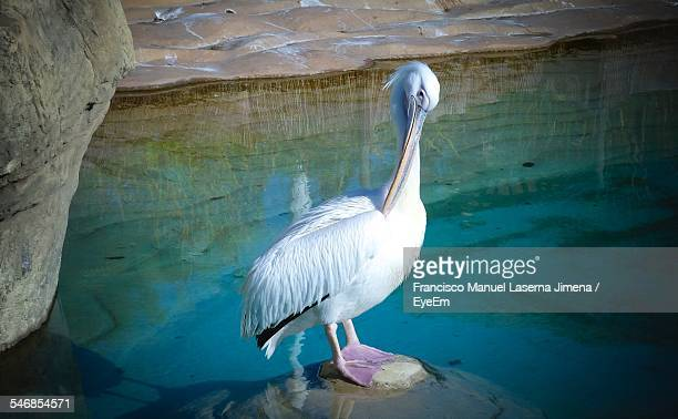 High Angle View Of Pelican On Rock By Lake