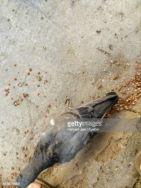 High Angle View Of Pigeons Eating Roasted Chick-Peas At Street