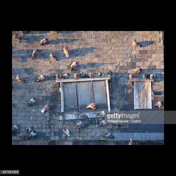 High Angle View Of Pigeons In Street