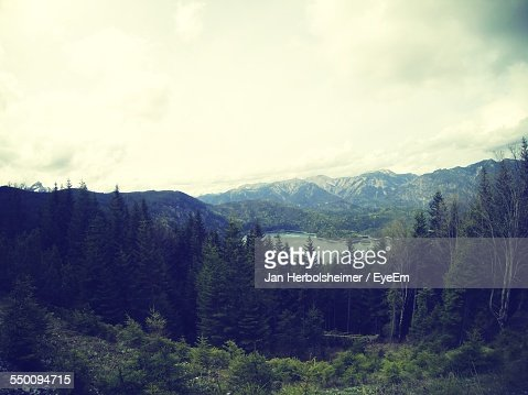 High Angle View Of Pine Trees Against Mountains And Sky