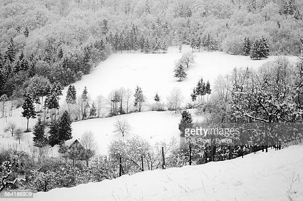High Angle View Of Pine Trees On Snowcapped Landscape