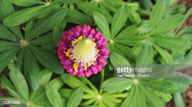 High Angle View Of Pink Flower Blooming Outdoors