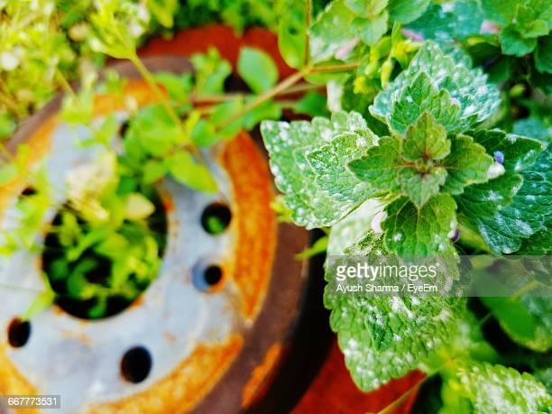 High Angle View Of Plant By Rusty Metallic Wheel
