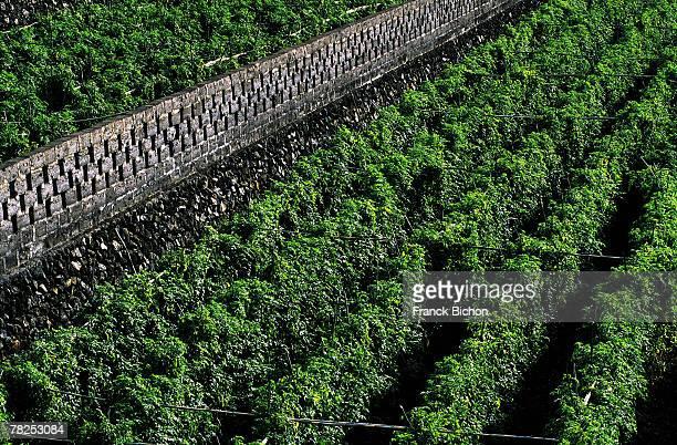 High angle view of plantation