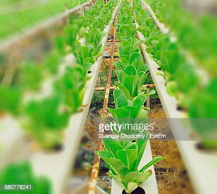 High Angle View Of Plants Growing In Greenhouse