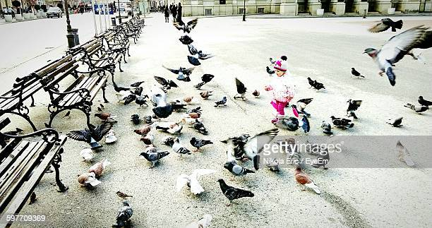 High Angle View Of Playful Baby Amidst Pigeons On Street