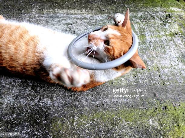 High Angle View Of Playful Ginger Cat Lying Outdoors