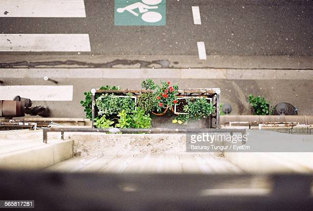High Angle View Of Potted Plants At Roadside