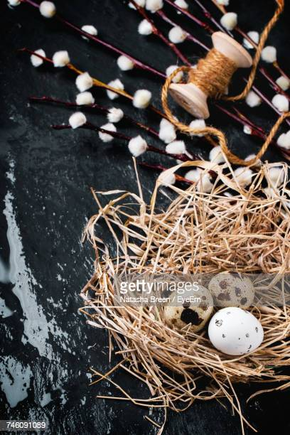 High Angle View Of Quail Eggs In Nest On Wet Stone