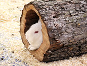 High Angle View Of Rabbit Resting On Log