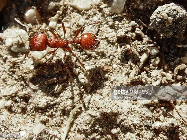 High Angle View Of Red Ant On Sand