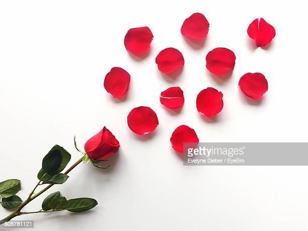 High Angle View Of Red Rose On White Background