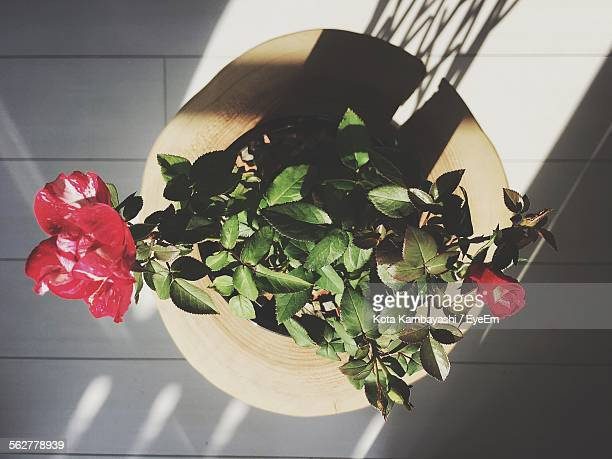 High Angle View Of Roses In Potted Plant