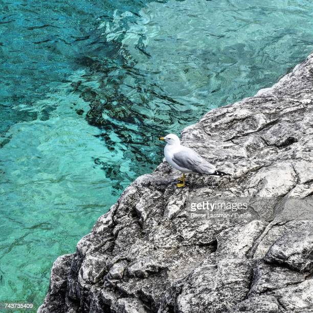 High Angle View Of Seagull Perching On Rock Formation By Sea