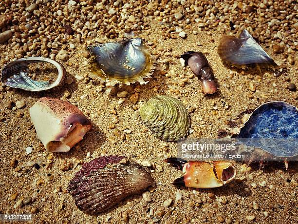 High Angle View Of Seashells And Dead Crab On Shore
