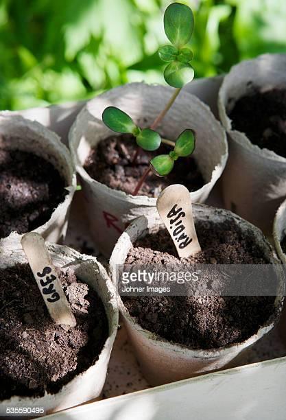 High angle view of seedlings