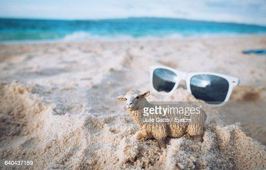 High Angle View Of Sheep Miniature And Sunglasses On Sand At Beach