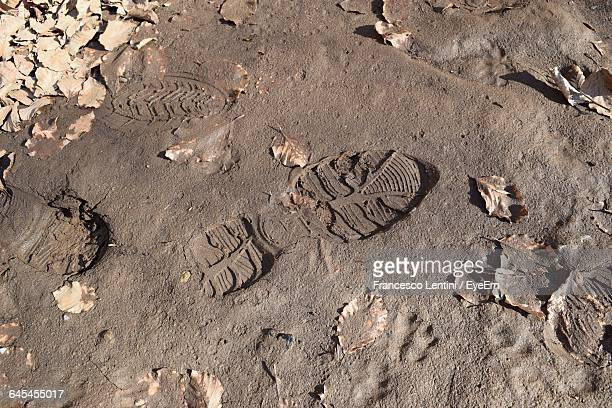 High Angle View Of Shoe Print On Mud