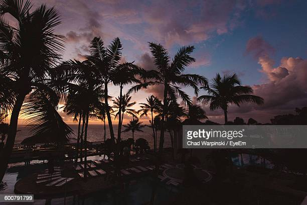 High Angle View Of Silhouette Palm Trees By Sea Against Sky At Sunset