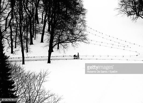 High Angle View Of Silhouette Trees On Snowcapped Field During Winter
