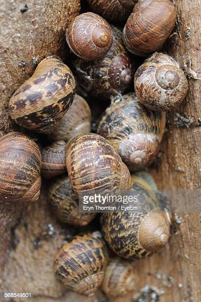 High Angle View Of Snails On Rock