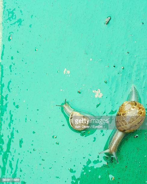 High Angle View Of Snails On Wet Surface